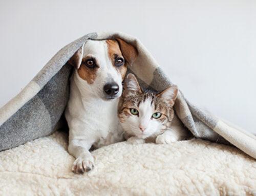 預防過敏體質 狗狗貓貓多吸多健康